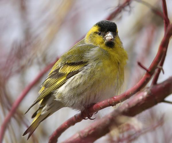 Скачать песню птицами считают